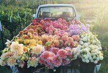 Flowers / Greens // Arrangements // Botanical Romanticism