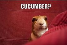 Funny / Smiešne zvieratká