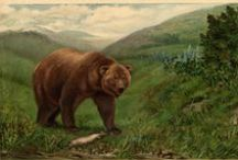 """Bear In Mind: The Story of the California Grizzly / Based on the 2004 book of the same name, """"Bear In Mind: The Story of the California Grizzly"""" chronicles the complex history of the state's most iconic symbol, the grizzly. Through artifacts on loan from institutions including The Bancroft Library, California State Library and more, the exhibit reveals the grizzly lives on as a steadfast symbol of the state's spirit of independence. Open Feb. 16-June 19, 2016. For more information, visit http://www.californiamuseum.org/bear-mind. #BearInMind / by California Museum"""