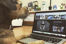 Print Shop Pooches / Whether it's pedigree pups or mangy mutts, decorators' dogs are valued members of staff at embroidery and print shops from Barking to Furness! Every month, we feature a dog from a different garment decorator & learn a bit about their role in the company