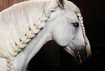 účesy pre kone