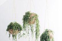 Plants / Green // Garden // Decor