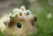 Animals / Cute // Fluffy // Furry