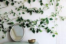 Home - Plants / Greens // Indoor // Pottery