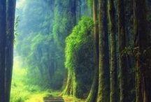 Abogado herencias / Resolvemos tus dudas sobre herencias y testamentos