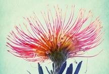 Fantastic flowers / by Krista Lahaye