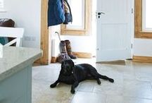 Self build Pets / Even these pets are getting in on the self build and renovation action