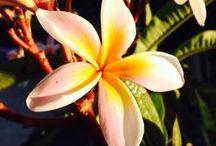 Oltreilbalcone / My blog: an hopeful metropolitan gardener (aspirante giardiniera metropolitana)