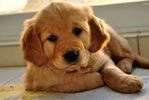 Animals / Animals stories and news for all animal lovers