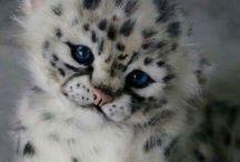 Animals / Я уверена,я не одна люблю животных.Не потому что они очень милые ,а потому,что они часть живой природы! На этой доске,Вы найдете красивые и милые фотографии животных,как диких,так и домашних:например кошек. Надеюсь что Ваша любовь к животным еще больше усилится,когда Вы увидите эти фотографии!❤️
