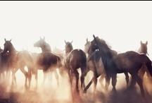 Horses=My Life