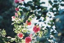 Nature - Flowers / 'Every Flower is a Soul Blossoming in Nature.' / 'Chaque fleur est une âme à la nature éclose.' Gerard de Nerval