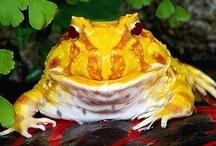 Frog Stew / by Harriet Swindell