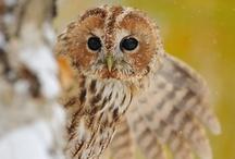 Owls / by Harriet Swindell