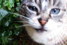 Cats / 'Anche il più piccolo dei felini, il gatto, è un capolavoro'. / 'The smallest feline is a masterpiece. / 'Le plus petit des félins est une oeuvre d'art.' Leonardo da Vinci