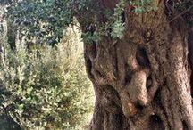 Beautiful Trees / Have you not considered how Allah presents an example, [making] a good word like a good tree, whose root is firmly fixed and its branches [high] in the sky? Surat Ibrahim - The Noble Qur'an // Une bonne parole est comme un bon arbre dont la racine est solide et dont les branches vont jusqu'au ciel. Il donne ses fruits en chaque saison. Le Coran // الر ۚ كِتَابٌ أَنزَلْنَاهُ إِلَيْكَ لِتُخْرِجَ النَّاسَ مِنَ الظُّلُمَاتِ إِلَى النُّورِ بِإِذْنِ رَبِّهِمْ إِلَىٰ صِرَاطِ الْعَزِيزِ الْحَمِيدِ v1424 / by Maxi Tendance