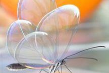 Butterflies / 'The butterfly counts not months but moments, and has time enough. / Le papillon ne compte pas les mois mais les moments, et a suffisamment de temps.'  ~Rabindranath Tagore