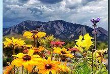 My Colorado dream / by Stephanie Burger