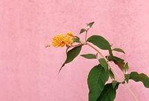 PINKYYY / rosa