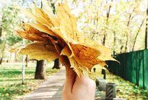 Sweetiestu autumn