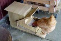 Chov domácich zvierat