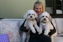THE SHIT PICKLES / Lola & Henry - two little Coton de Tulears teaching their humans how to behave.