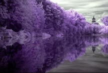 ♥ I LOVE PURPLE ♥ / by Cindy Etter
