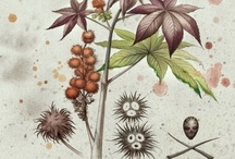 Botanicals :: Drawings
