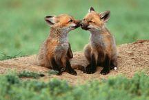 Foxy  / by Jennifer Williams