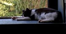 """Cats and the Art of Slow / """"I have lived with several Zen masters - all of them cats."""" - Ekhart Tolle."""