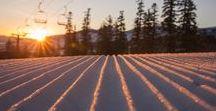 Mammoth / Ski North America - Discover Mammoth