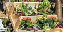 Aquaponics and Other Gardening Essentials