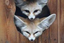 animals / by Kristina K