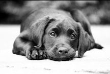 Dogs / ... are miracles with paws.   / by Katrin