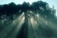 Fog / by Parvaneh