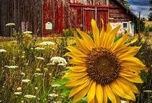 Barns Old and New / by Veda Morley
