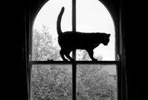 CAT in the Window / Kitties on the window, looking out or hanging out.