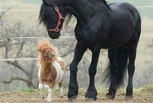 Horselife.«