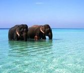 Sri Lanka Holidays / If you are ready to holiday in Sri Lanka, our blog is perfect for you!