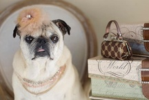 prococious,perfectly precious pugs !!!! / love my pugs----all others too !!! / by Jill Spalding
