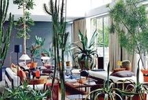 indoor gardens / by Marlie Graves