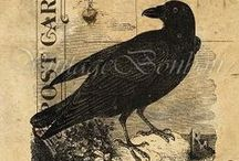 Crows, Ravens, and All Birds Black / by Kerstin Entwistle