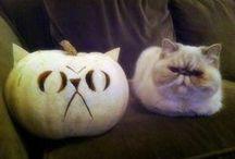 Halloween - Pumpkin Ideas
