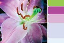 Colour palettes • Kleur paletten / Colour palettes by Ensō Designs • Kleur paletten door Ensō Ontwerpen