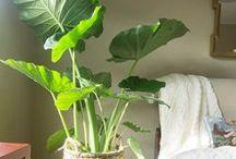 Plants (indoors) • Planten (binnenshuis) / Inspirational plant and pot ideas • Inspirerende plant en pot ideeën