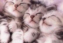 kittens / Poezelig