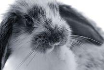 Konijnen ❤ / Mijn konijnenberg.