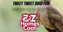 Tweet Tweet Bird Fun - Homeschool Bird Unit Resources / Bird info activities, and fun!