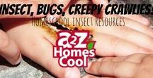 Insects, Bugs, Creepy Crawlies! - Homeschool Insect Resources / Lessons, activities, and ideas for teaching about insects.