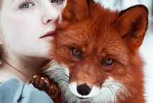 Animal - FOX / This Board will help you immerse yourself in the wonderful animal world in which we draw inexhaustible inspiration for their work!